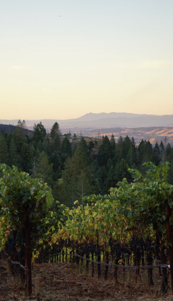 Electric Scenic Drive in Napa Valley - Go EVerywhere